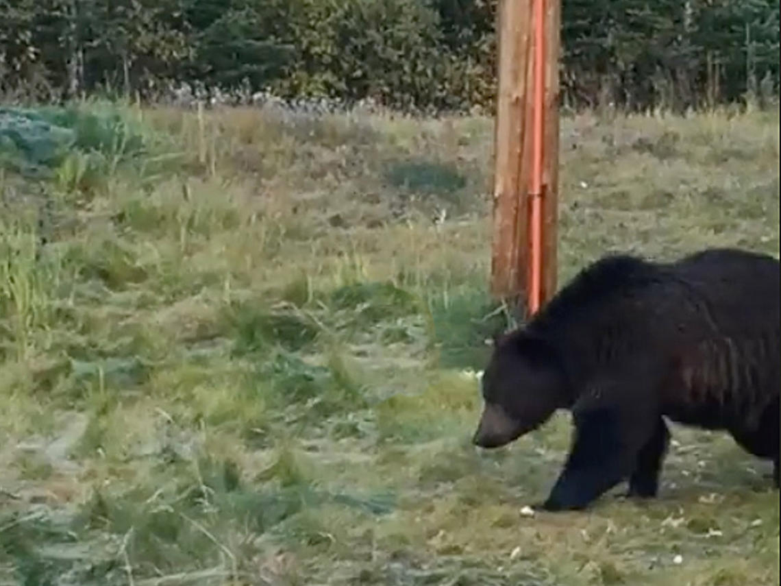bear safety